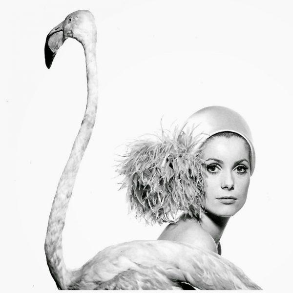 catherine-deneuve-photo-by-david-bailey-taken-jan-11-1968-for-vogue